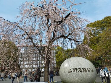 写真で見る:春風に乗って誘われてサクラ・さかな・さまよう上野・アメ横で